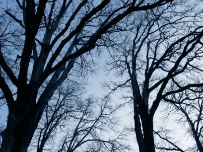 Bare_Trees_2-624x467